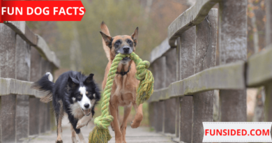 62-DOG-FACTS-PICTURE