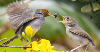 interesting bird facts