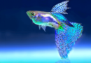 61 Interesting and Fun Fish Facts that Will WOW You