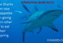 60 Fun and Interesting Shark Facts